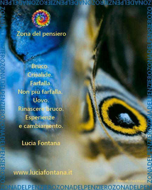 Bruco Crisalide Farfalla